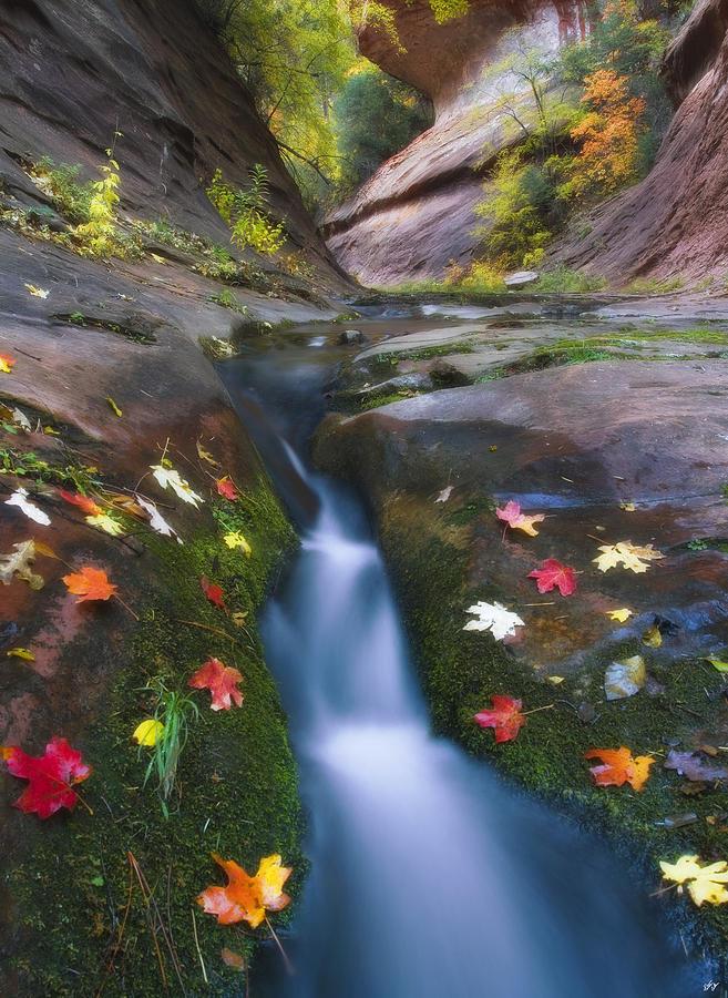 Cut Into Autumn Photograph