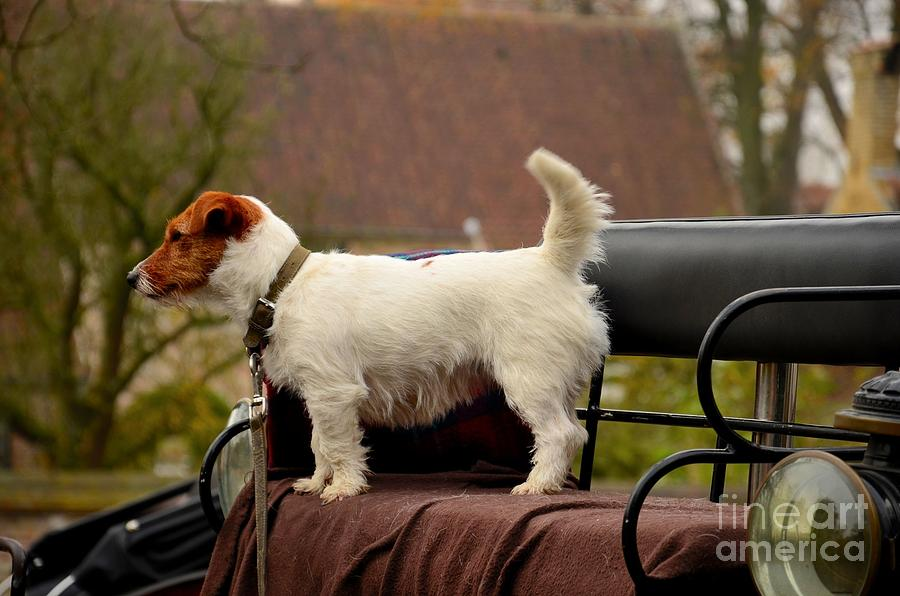 Cute Dog On Carriage Seat Photograph