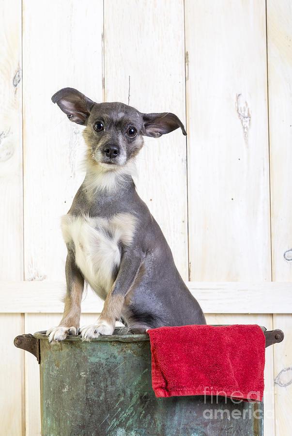 Cute Dog Washtub Photograph