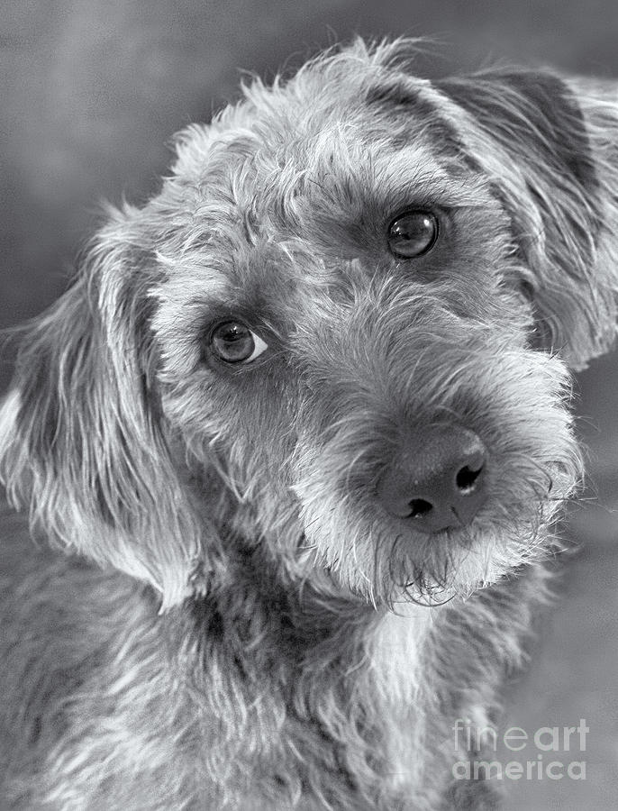 Cute Pup In Black And White Photograph