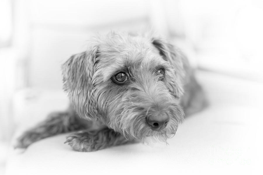 Cute Pup On Watch Photograph  - Cute Pup On Watch Fine Art Print