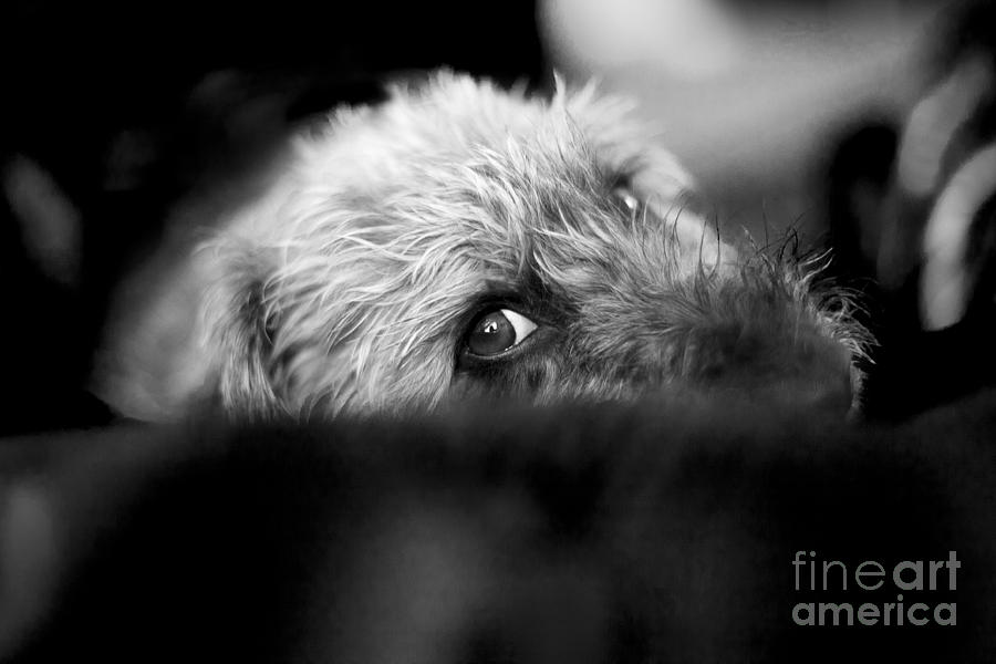 Cute Pup Sneek A Peek Photograph  - Cute Pup Sneek A Peek Fine Art Print