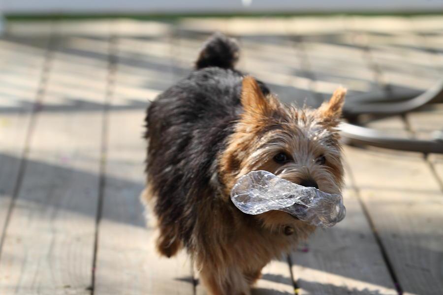 Dog Photograph - Cutest Dog Ever - Animal - 011310 by DC Photographer