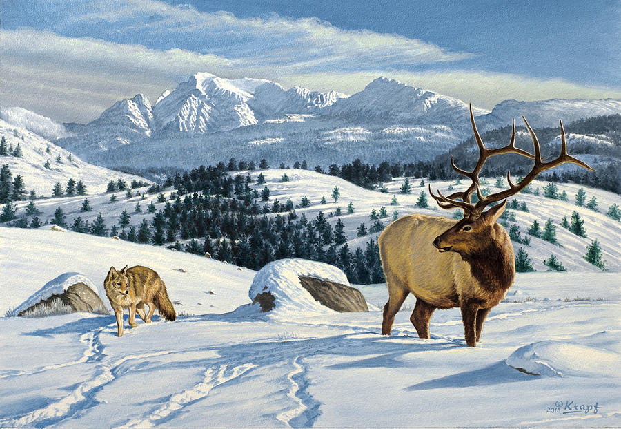 Cutoff Mountain -  Elk And Coyote   Painting