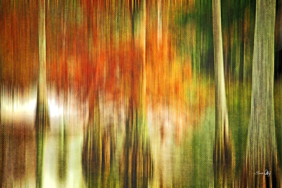 Abstract Photograph - Cypress Pond by Scott Pellegrin