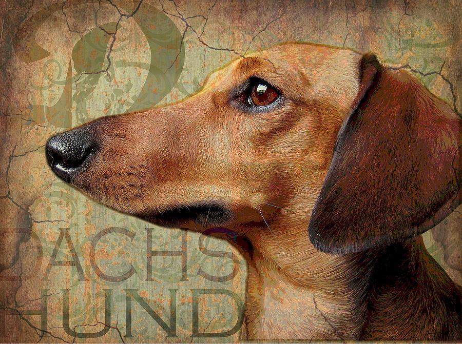 Dog Print Digital Art - Dachshund by Wendy Presseisen