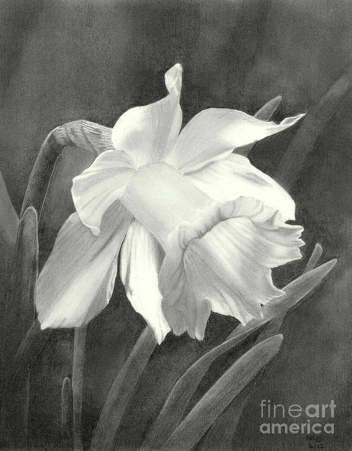 Daffodil Drawing - Daffodil by Nicola Butt
