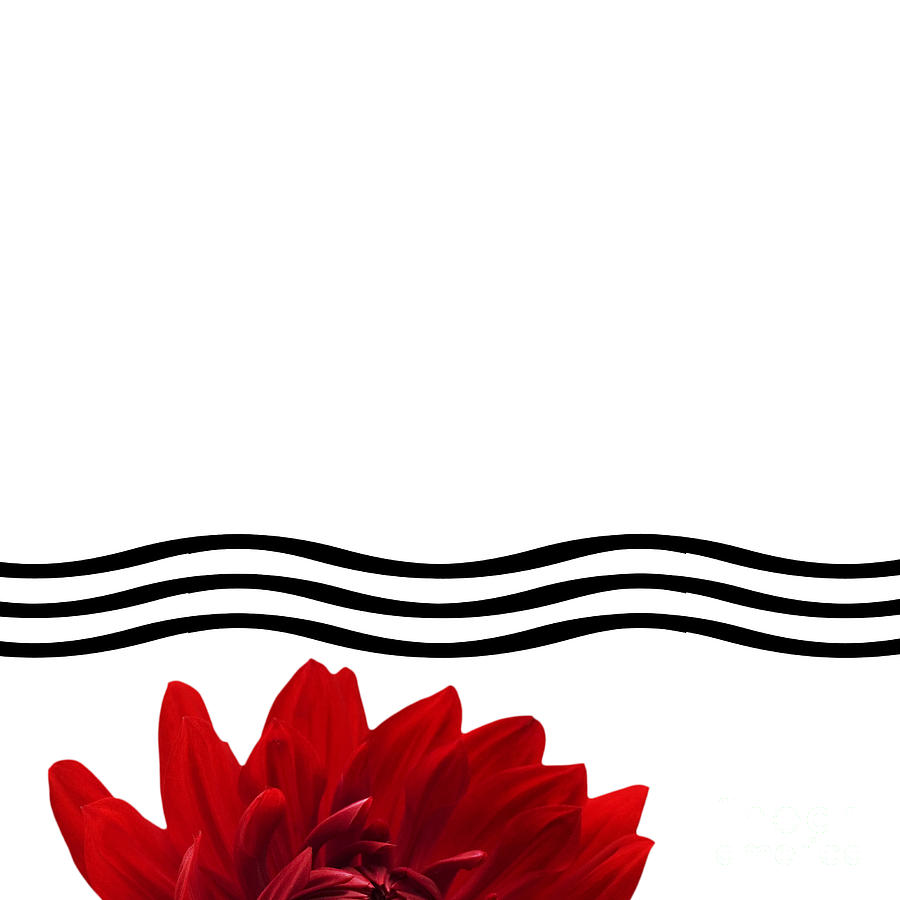 Dahlia Flower And Wavy Lines Triptych Canvas 1 - Red Photograph