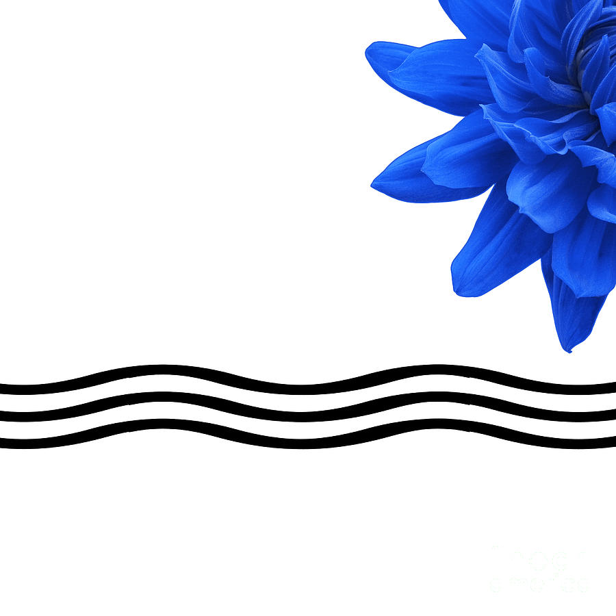 Dahlia Flower And Wavy Lines Triptych Canvas 3 - Blue Photograph