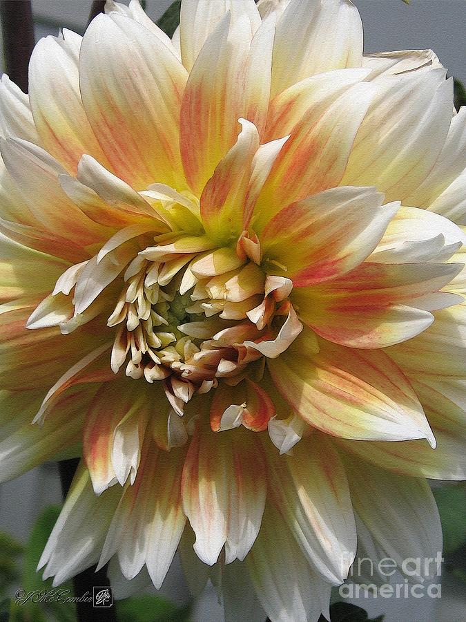 Dahlia Painting - Dahlia Named Peaches-n-cream by J McCombie