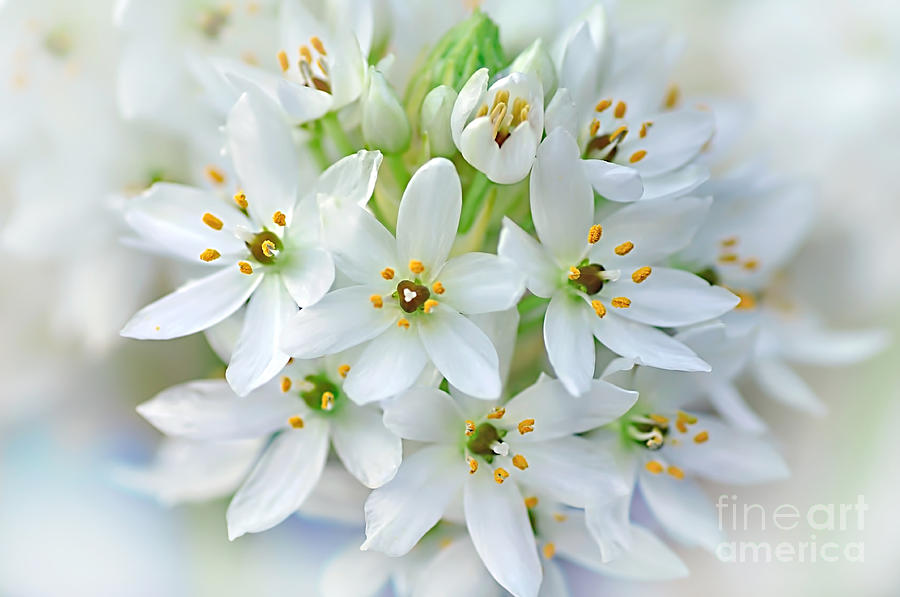 Dainty Spring Blossoms Photograph