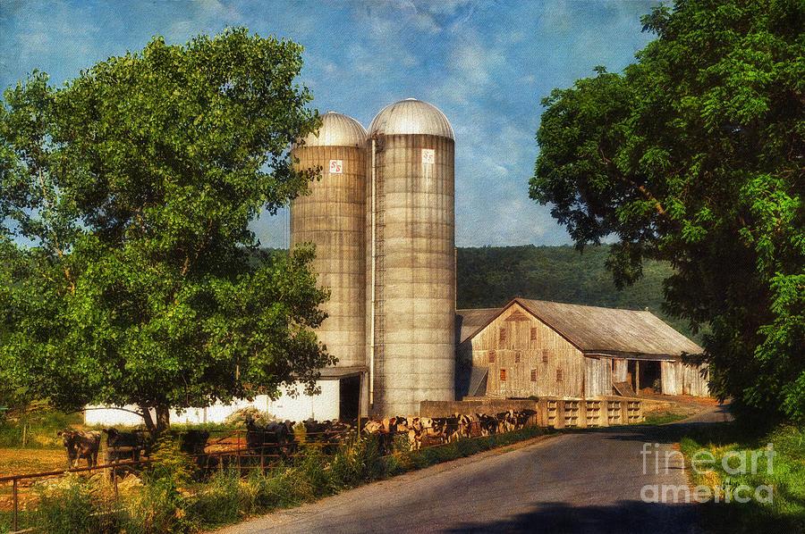 Dairy Farming Photograph