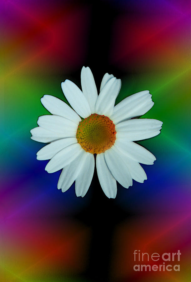 Daisy Bloom In Neon Rainbow Lights Photograph