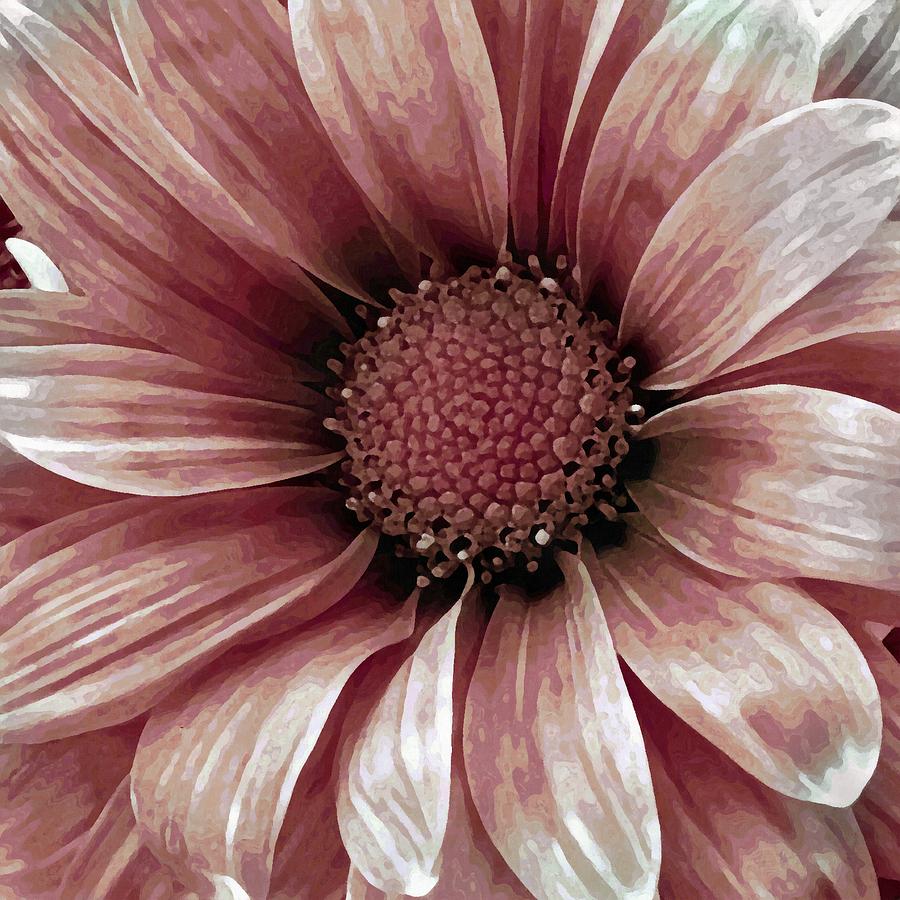 Daisy Daisy Blush Pink Mixed Media