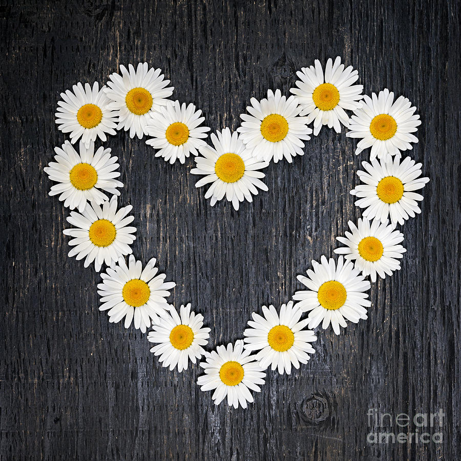http://images.fineartamerica.com/images-medium-large-5/daisy-heart-elena-elisseeva.jpg