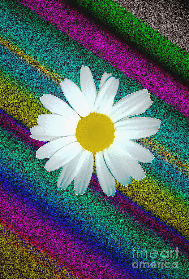 Daisy With Physchedelic Background Photograph  - Daisy With Physchedelic Background Fine Art Print