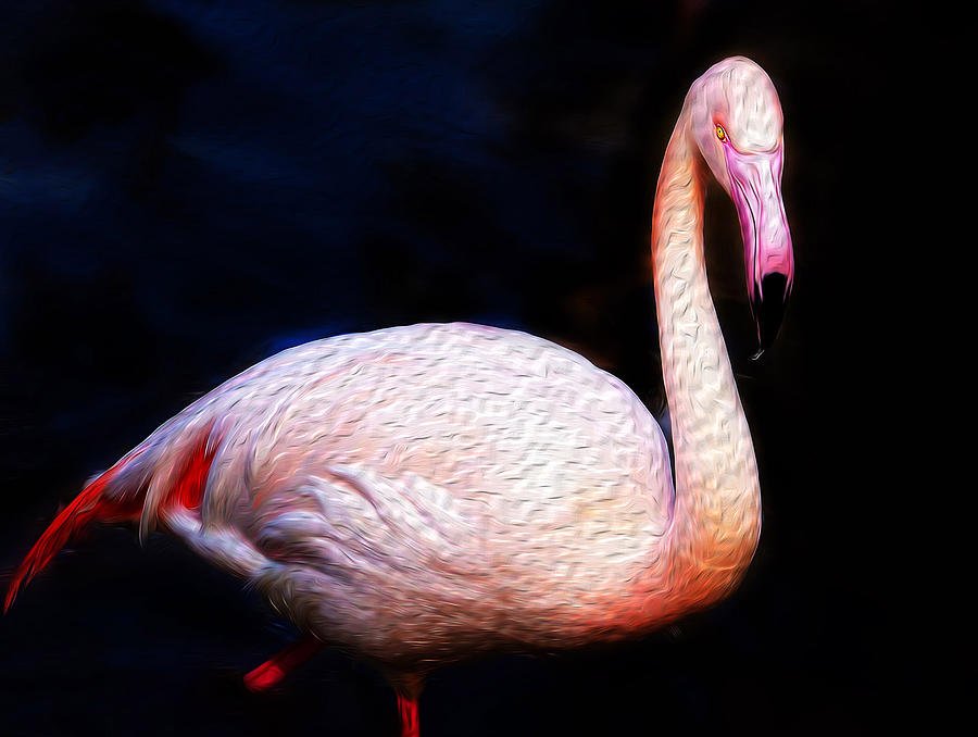Dancing Flamingo Photograph  - Dancing Flamingo Fine Art Print