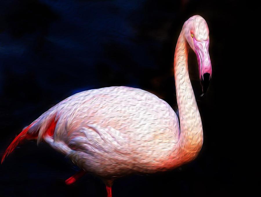 Dancing Flamingo Photograph