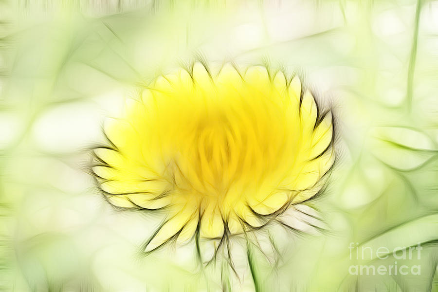 Dandelion Digital Art