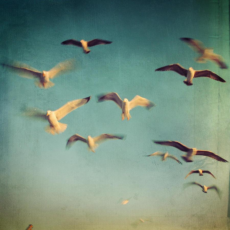 Dans Avec Les Oiseaux Photograph