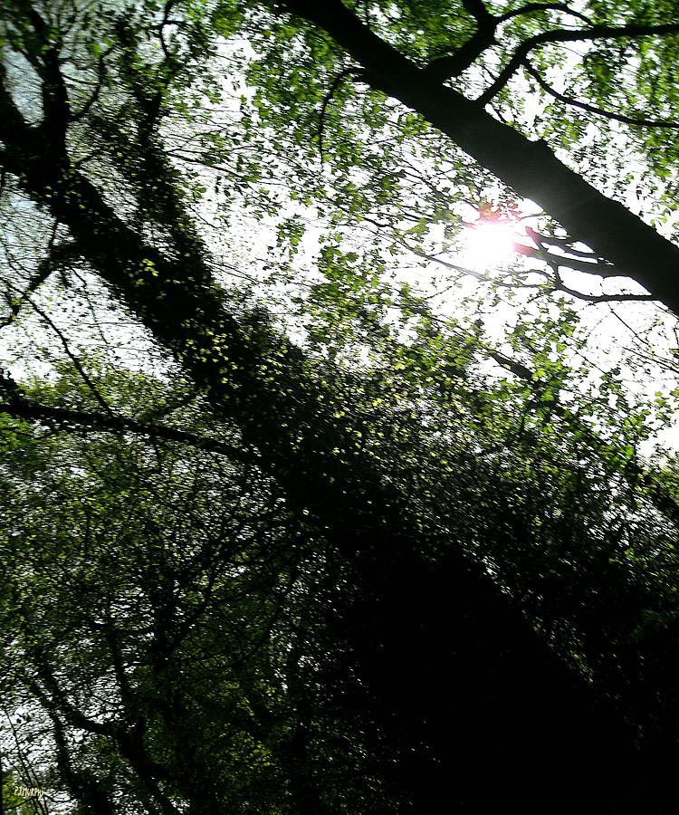 Dappled Forest Photograph