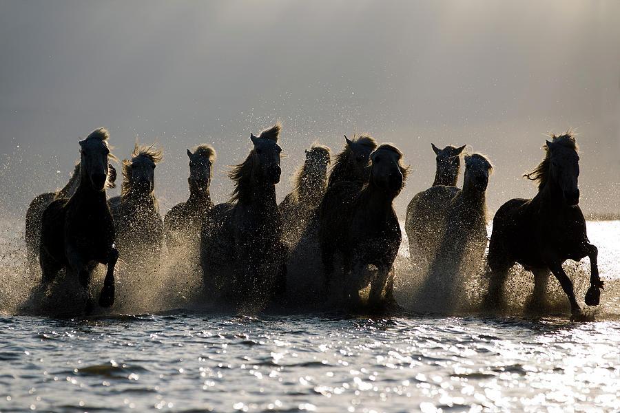 Dark Horses Photograph