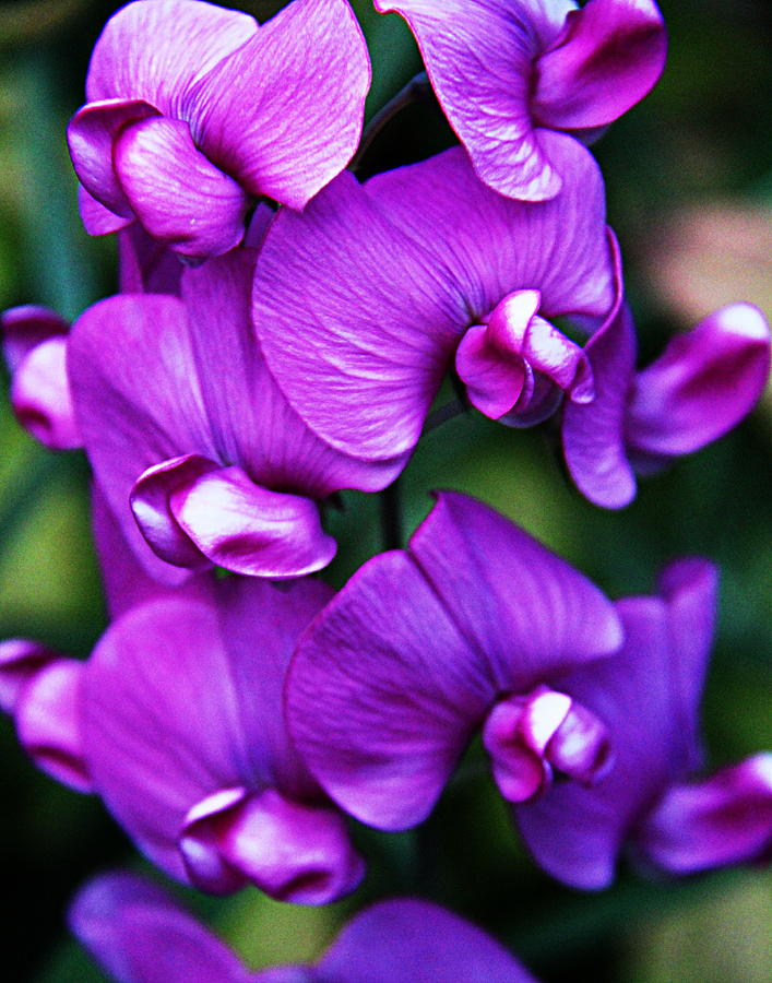 bouquet of purple orchids, Beautiful flower
