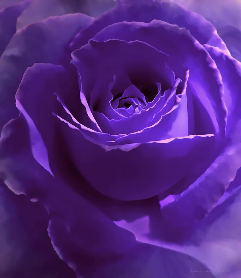 Dark Secrets Purple Rose Photograph By Jennie Marie Schell