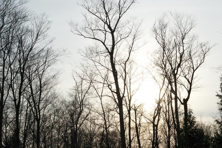 Dark Tree Bright Sky  Photograph