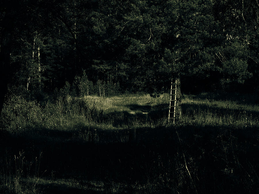 Dark Woods Photograph