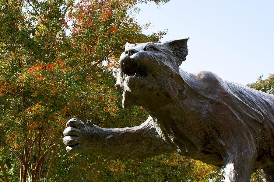 Davidson College Wildcat Statue Photograph By Orange Cat Art