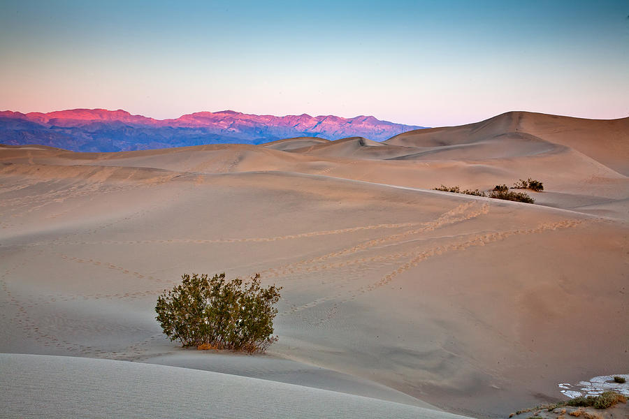 Mesquite  Flats Dunes Photograph - Dawn Dunes by Peter Tellone