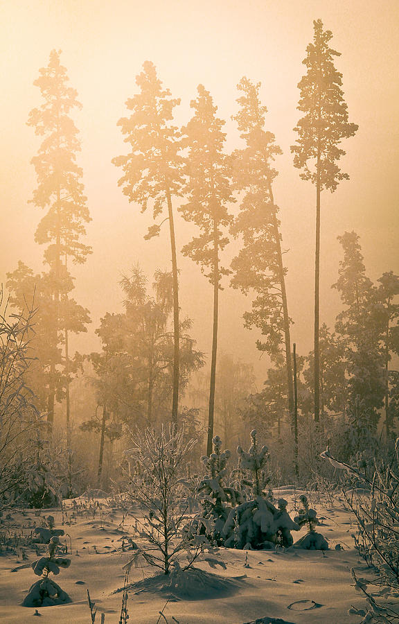 Dawn In The Forest Bashkir Photograph  - Dawn In The Forest Bashkir Fine Art Print
