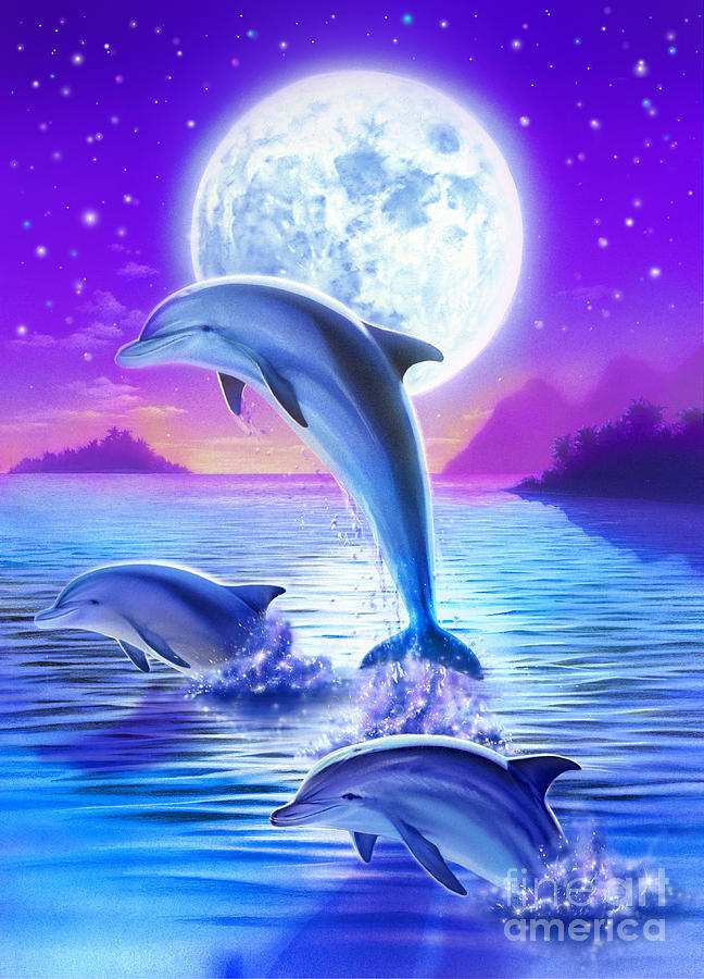 Day Of The Dolphin Digital Art By Robin Koni