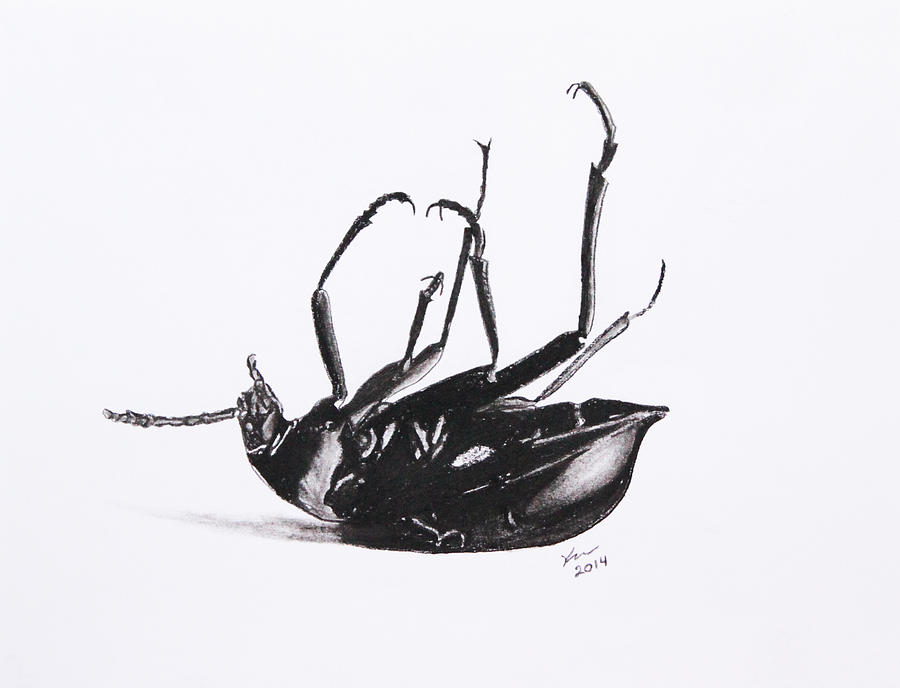 Firefly insect drawing