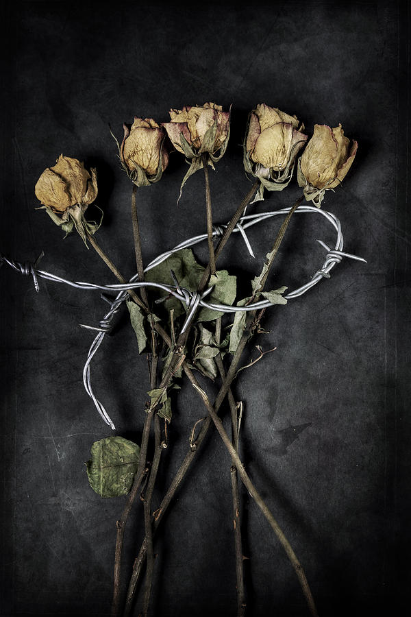 Wire Photograph - Dead Roses by Joana Kruse