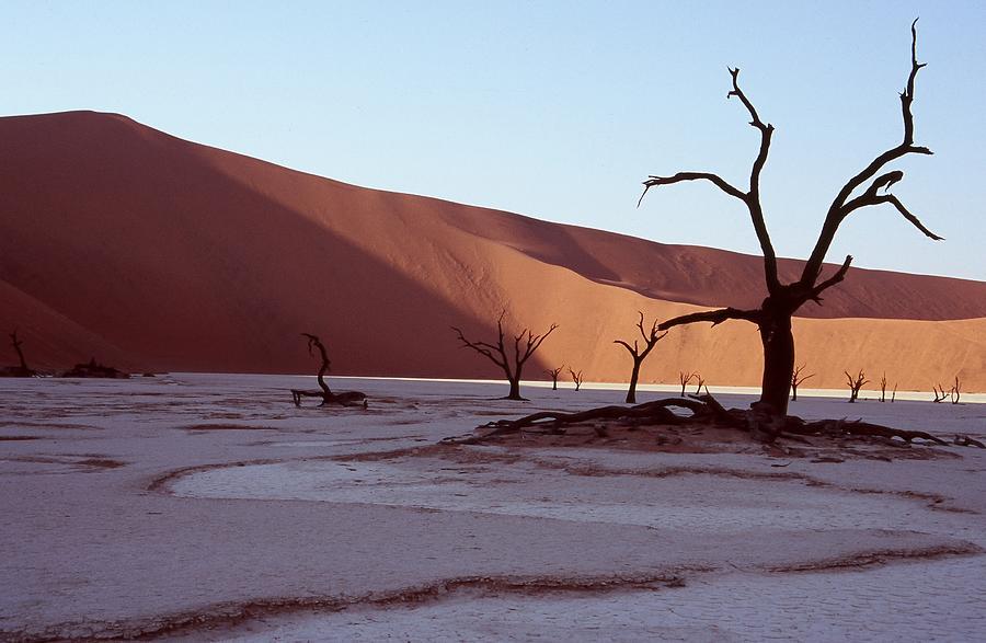 Landscape Photograph - Dead Vlei by Stefan Carpenter