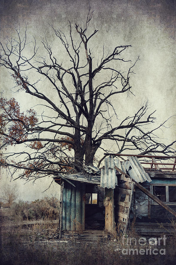 Decay Barn Photograph  - Decay Barn Fine Art Print