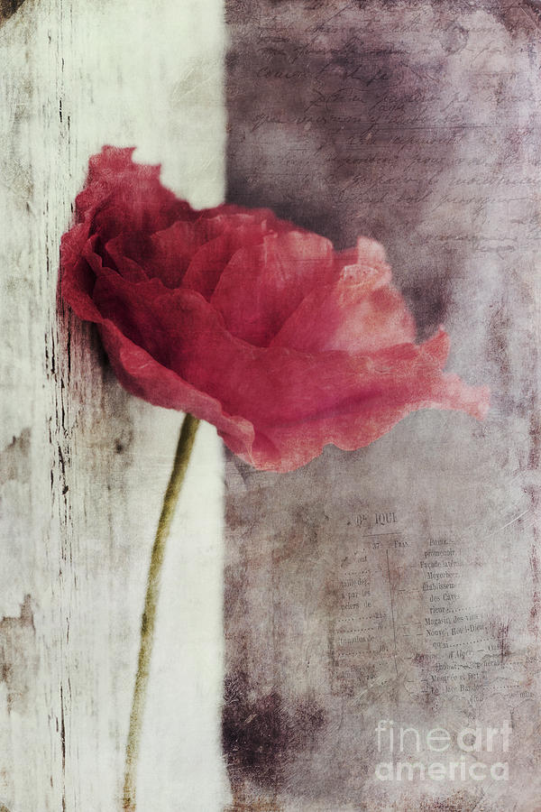 Poppy Photograph - Decor Poppy by Priska Wettstein