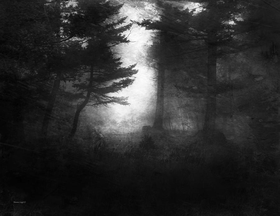 Deep In The Dark Woods Photograph