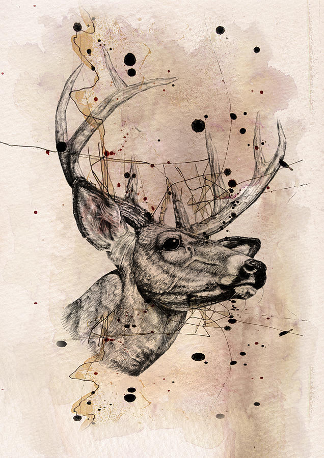 Deer 4 Drawing
