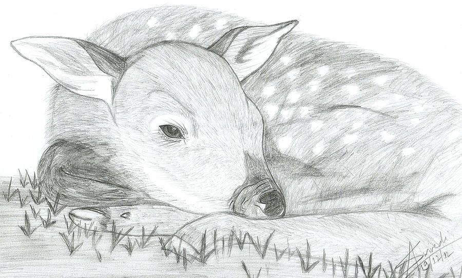 Deer Sketch Drawing