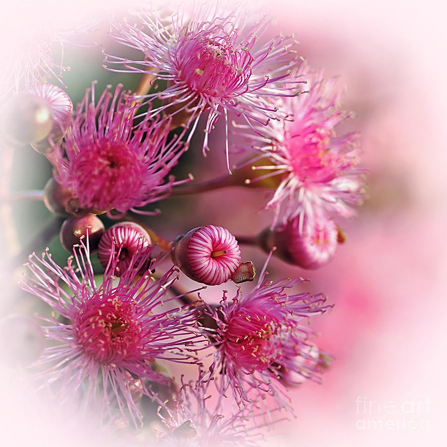 Delicate Buds And Blossoms Photograph