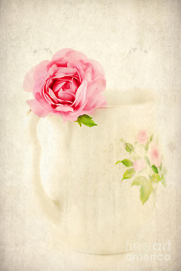 Aged Photograph - Delicate by Darren Fisher