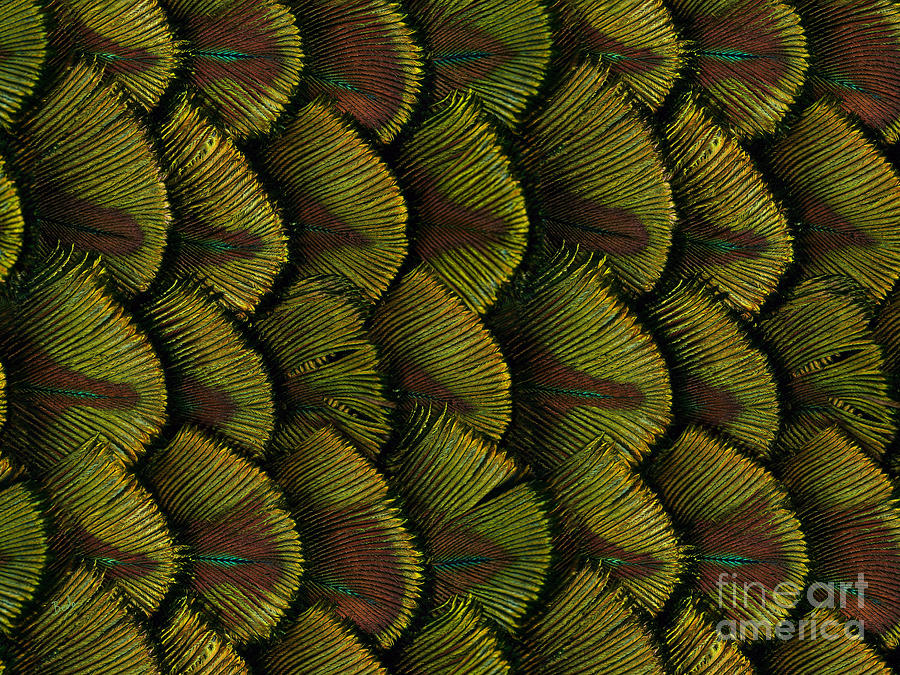 Feather Digital Art - Delicate Feather by Bedros Awak