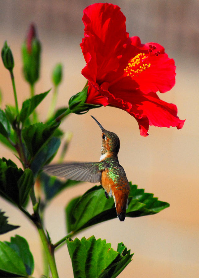 Delightful Hummer Photograph