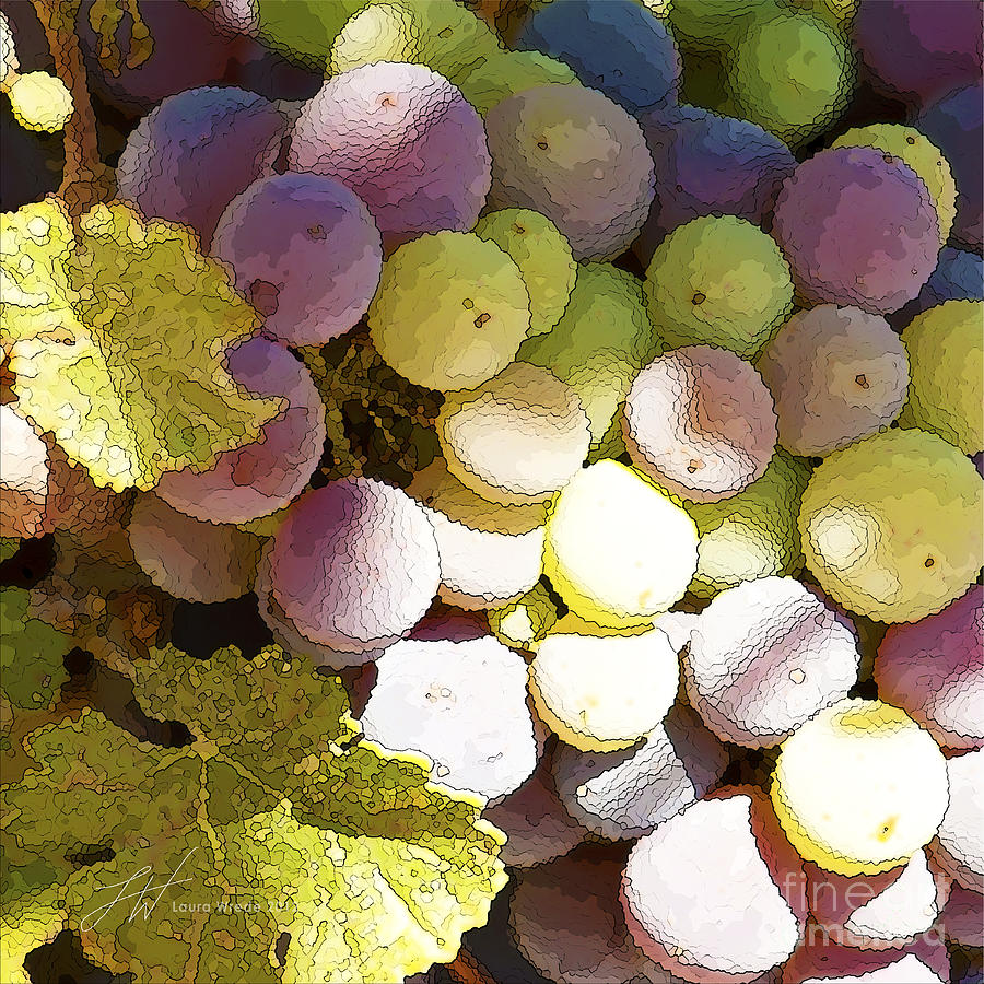 Grapes Painting - Della Vite by Artist and Photographer Laura Wrede