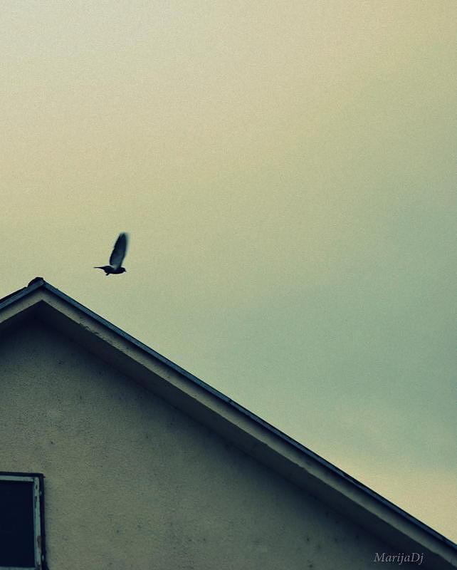 Birds Photograph - Departure by Marija Djedovic