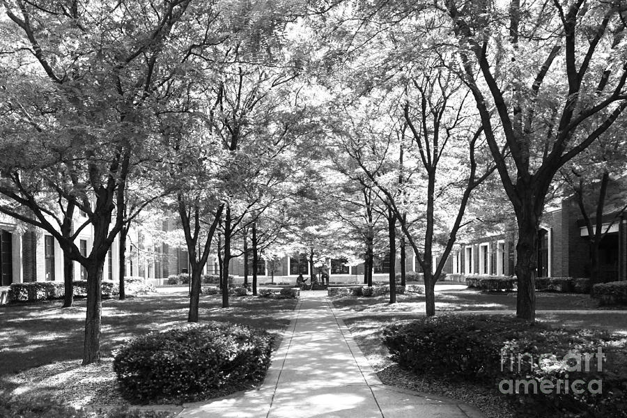 Depaul University Richardson Library Courtyard Photograph  - Depaul University Richardson Library Courtyard Fine Art Print