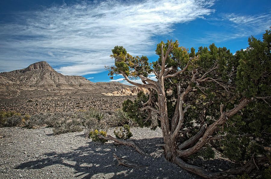Desert Beauty Photograph